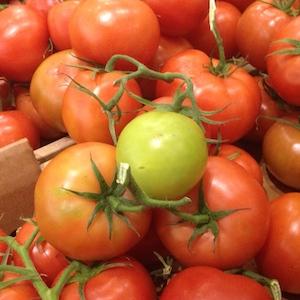 distinctive tomato